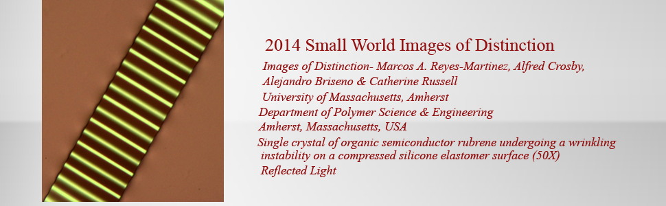 masthead_template1smallWorld-Distinction2014